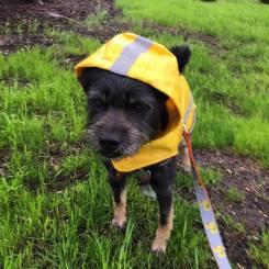Theodore raincoat
